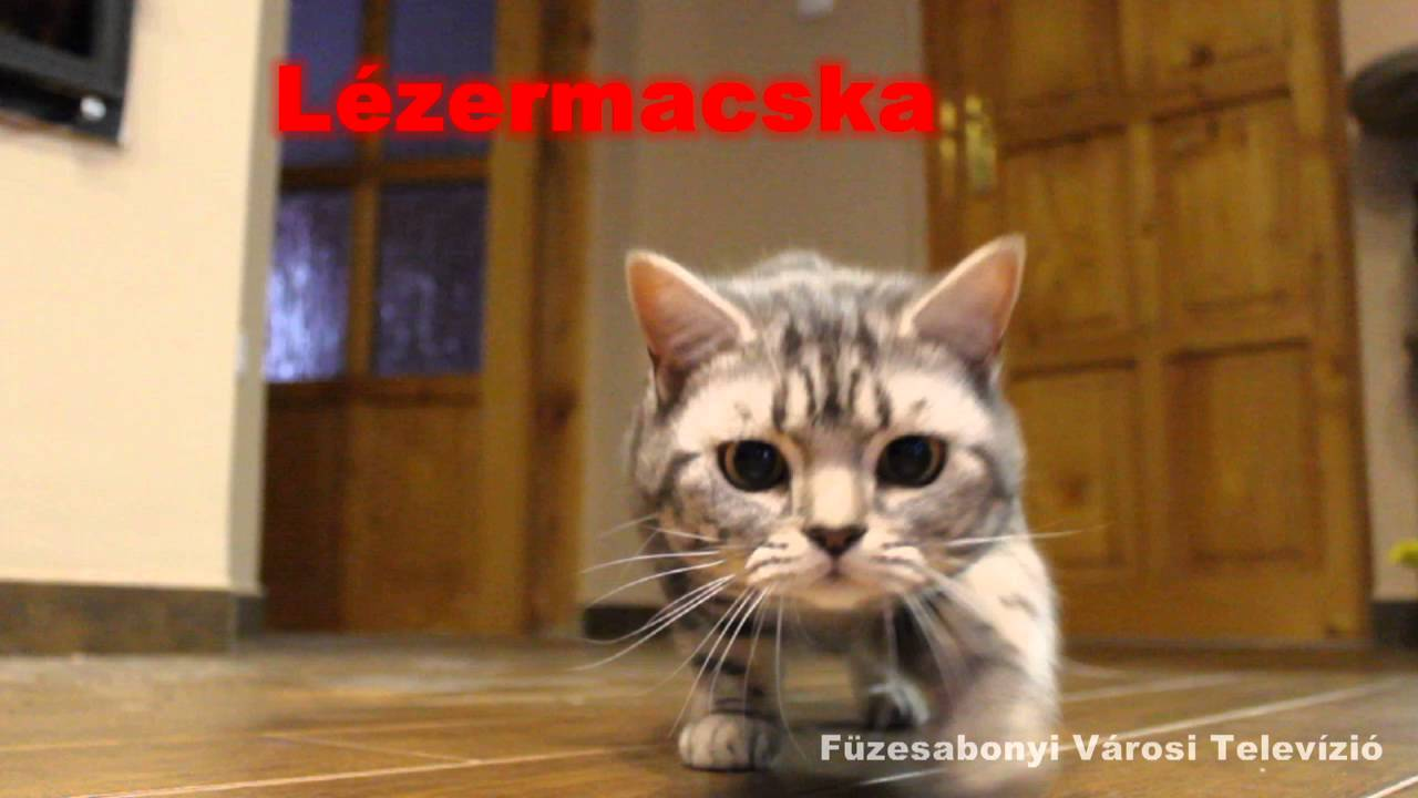 Mindeközben Füzesabonyban – Támad a Lézermacska!