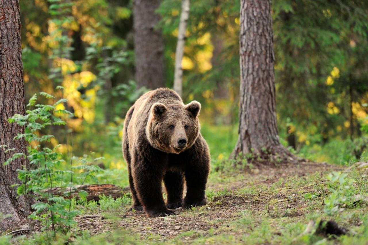 Ismét medvét láttak Füzesabonyban