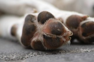 Kegyetlen állatkínzók eltiltását kérte az állattartástól az ügyészség